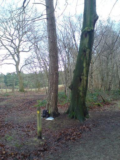 delamere-forest-jan-09